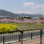山梨◆甲府盆地/春を行く『あずさ』の車窓から【地域担当・出張ピンナップ】