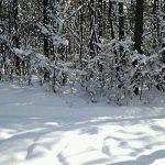 山梨◆八ヶ岳/雪!雪!雪!【日々の業務より・たかねの里だより】