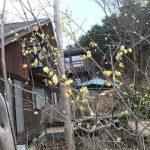 山梨◆八ヶ岳/高根の里にも春がきました【八ヶ岳南麓・たかねの里だより】