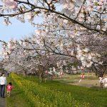 茨城◆常陸大宮市/桜咲く茨城県北へ・・・【編集スタッフメモ】