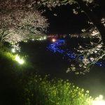 静岡◆南伊豆/ひと足早い春の訪れ~河津桜が見頃です【売主様からのたより】