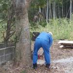 千葉◆勝浦市/木の伐採 その(1)【千葉・金澤&鈴木の田舎暮らしお助け隊】