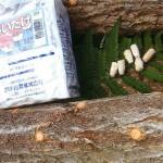 宮城◆白石蔵王/誘客を椎茸栽培で(月刊ふるさとネットワーク5月号より)