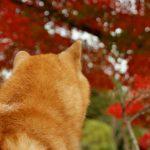 栃木◆那須/「10年間とっても楽しかったヨ~」憧れの田舎暮らしの先に【地域店・日々の業務より】