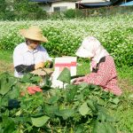栃木◆那須/お待ちかねの枝豆収穫祭!仲良し夫婦はおしゃべり作業中【高久の里山日記リターンズ】