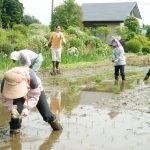 栃木◆那須/力を合わせた田植えと赤空豆のプレゼント【高久の里山日記・リターンズ】