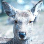 岩手◆遠野/田舎暮らしは自然が相手でして【みちのく岩手・新遠野物語】