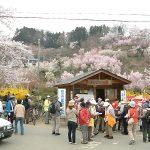 福島◆福島市/東北地方・桜の見どころ満載【本部スタッフ・出張旅ガラス】