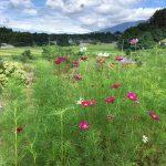 山梨◆八ヶ岳/季夏のみぎり・8月のお知らせ【八ヶ岳南麓・たかねの里だより】