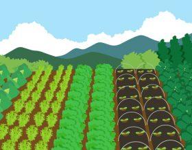 長野◆安曇野/自給自足するにはどのくらいの面積?!~敷地50坪からの畑ライフ【ちーまめ安曇野】